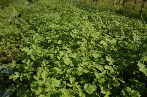 nawozy naturalne w uprawie roślin